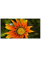 Фотокартина на холсте Оранжевый цветок, 60*120 см