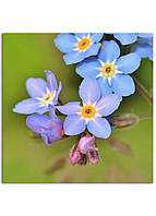 Фотокартина на холсте Дикий цветок, 60*60 см