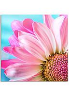 Фотокартина на холсте Розовая ромашка, 60*60 см