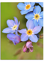 Фотокартина на холсте Дикий цветок, 60*80 см