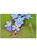 Фотокартина на холсте Дикий цветок, 60*90 см