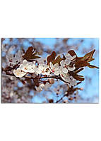 Фотокартина на холсте Вишневый сад, 60*90 см