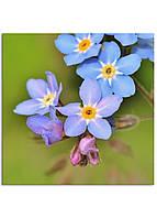 Фотокартина на холсте Дикий цветок, 70*70 см