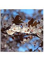 Фотокартина на холсте Вишневый сад, 70*70 см