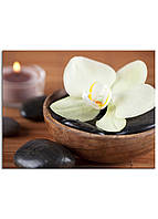 Фотокартина на холсте Белая орхидея, 70*90 см