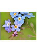Фотокартина на холсте Дикий цветок, 70*90 см
