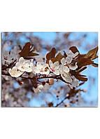 Фотокартина на холсте Вишневый сад, 70*90 см