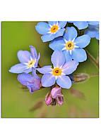 Фотокартина на холсте Дикий цветок, 80*80 см