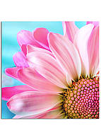Фотокартина на холсте Розовая ромашка, 80*80 см