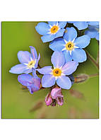 Фотокартина на холсте Дикий цветок, 90*90 см