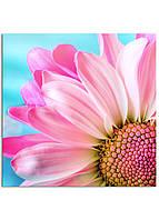 Фотокартина на холсте Розовая ромашка, 90*90 см