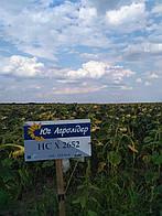 Семена подсолнечника НС Х 2652, посевной материал