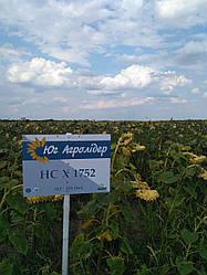 Семена подсонечника НС Х1752  посевной материал 20 г.