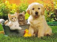 Подарочные наборы для животных и людей