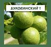 Грецкий орех Буковинский 1 двухлетний