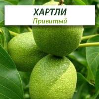 Привитые саженцы грецкого ореха Хартли