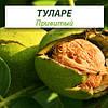 Привитые саженцы грецкого ореха Туларе
