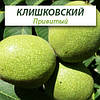 Привитые саженцы грецкого ореха Клишковский