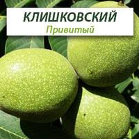 Привитые саженцы грецкого ореха Клишковский, фото 1
