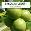 Привитые саженцы грецкого ореха Буковинский 1