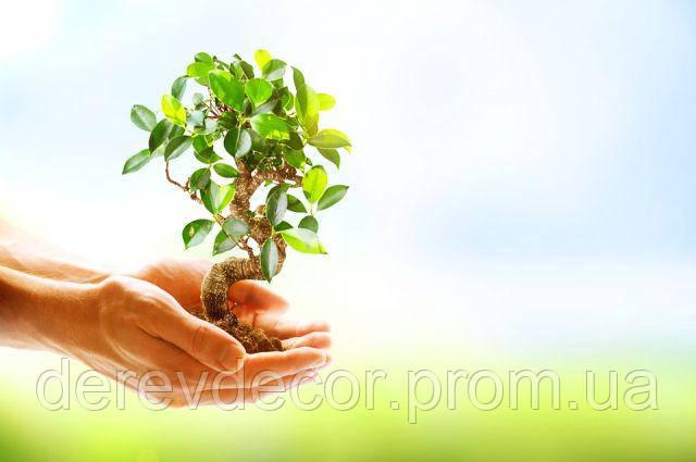Дерево проти Пластику