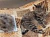 Перчатка для Снятия Шерсти с Животных Pet Brush Glove, фото 7