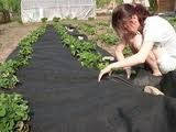 Агроволокно черное Агротекс 60 г/м2 мульча, размер 3,2*10м.п. пакет
