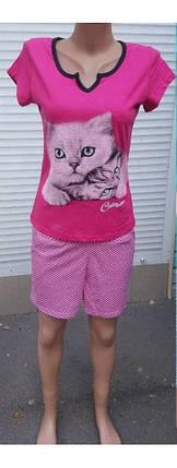 Женская пижама шорты с футболкой с принтом Коты 40-58 р, фото 2