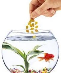 Корма для аквариумных рыб и черепах