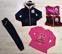 Велюровый костюм-тройка для девочек Seagull оптом , 4-12 лет., фото 1