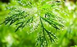 Як вода впливає на біопрепарати та хімічні ЗЗР
