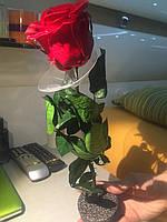 Стабилизированная роза на стебле