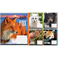 Тетрадь ученическая А5/12 листов в клетку 1В Wild fox
