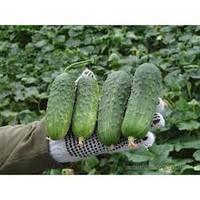 Семена огурцов Регал F1 10 семян Clause, фото 1