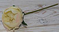 Цветок пиона нежно-желтого с розовинкой, фото 1