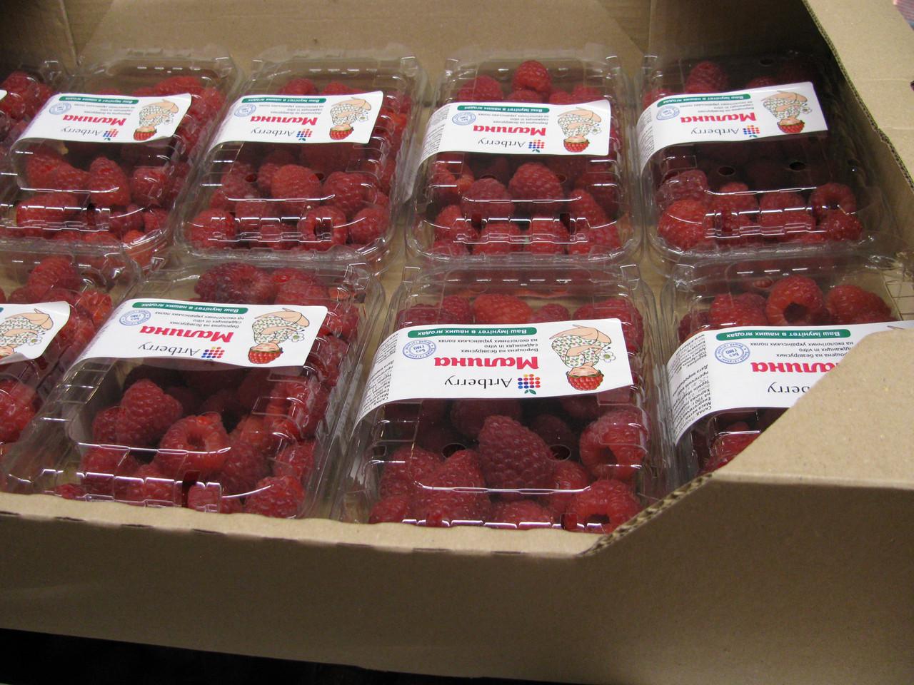 Гофролоток для малины  на 10 пинеток по 500 г. ягоды