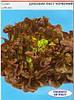 Семена салата Дубовий лист Красный 1г Коуел