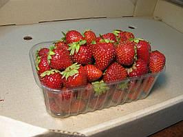 Пластиковий контейнер для ягід на 500. р. ягоди