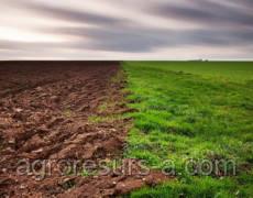 Президент подписал закон о предотвращении рейдерства сельхозземель