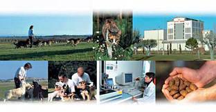 Виробництво і якість Royal Canin
