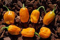 Перец  Хабанеро оранж., фото 1