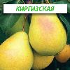 Саженцы груши Киргизская