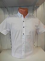 Рубашка мужская SENATO короткий рукав, узор, стрейч, однотонная 001 \ купить рубашку оптом.