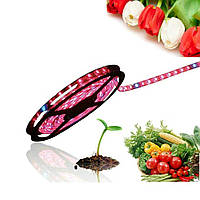 Фитолента 5м адаптер 5A водонепроницаемая Plant LED SMD5050 90W IP65 Red Blue 4:1 комплект для растений