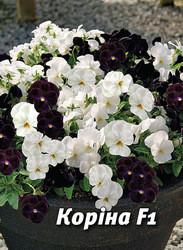 Семена виолы Корина F1, 50 сем., бело-черная смесь