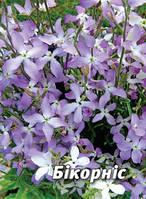 Семена матиолы Бикорнис, 5 гр., двурогая