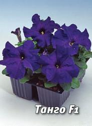 Семена петунии Танго F1, 100 сем., крупноцветковая синяя