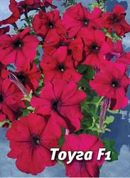 Семена петунии Тоуга F1, 100 сем., крупноцветковая пурпурно-красная