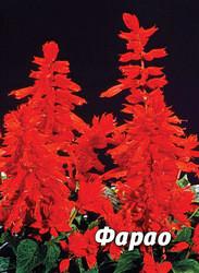 Семена сальвии Фарао, 1 гр., блестящая красная