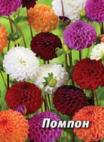 Семена георгина Помпон, 5 гр., махровый, смесь